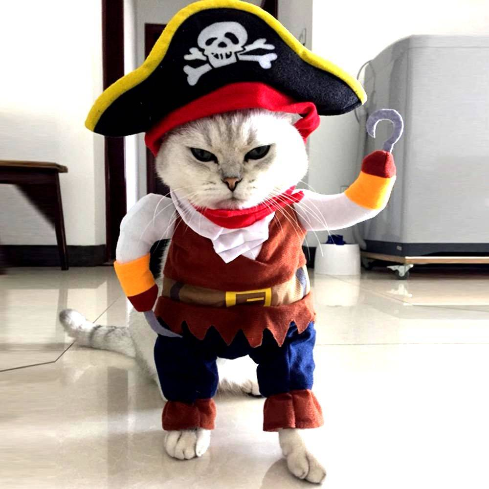 pet costume pirate