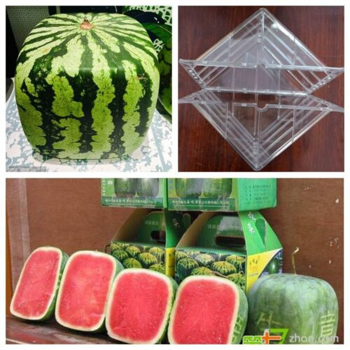 Fruit Growth Shaper – Watermelon heart Shaper