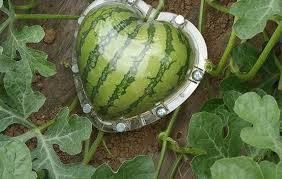 fruit mold watermelon