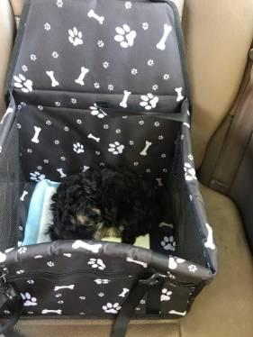 Hb797e949a06845e69984b4c4642166eds DIY Foldable pet car seat