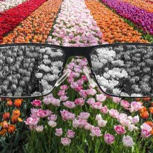Stop Color Blind Sunglasses