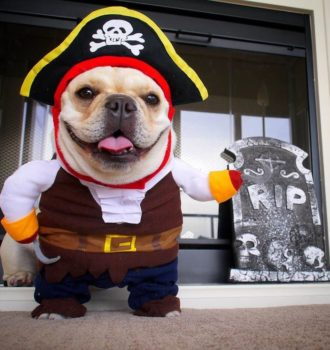 dog-pirate-costume-korrectkritterscom-dog-costume-pirate-l-ad9677f7e070cc90